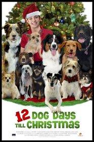 12 cani sotto l'albero