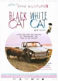Gatto nero, gatto bianco