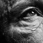 Bill Brandt / Eyes © Sandro Miller courtesy of Catherine Edelman Gallery Chicago