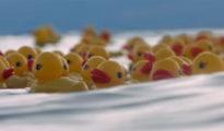 nientepopcorn_film_italiani_venezia_73_piuma
