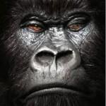 Foto del profilo di Gorillanero