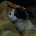 Foto del profilo di catnipEcho