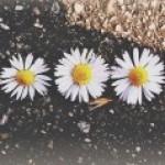 Foto del profilo di petalidimargherita