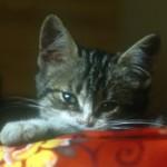 Foto del profilo di renataco
